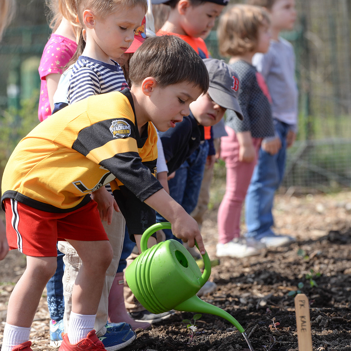 PK students plant kale seedlings at the Senior School Farm.
